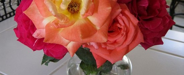 dukan diet recipe Roses